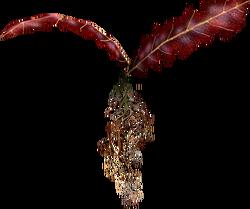 TESV Crimson Nirnroot