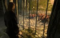 Kornalus Spiders