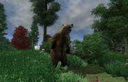 Bear Season Locate