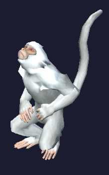 File:A pet monkey (visible).jpg