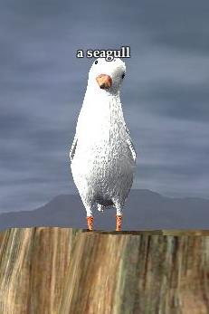 File:A seagull.jpg