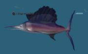 A large saberfish