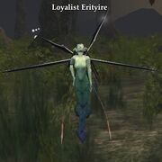 Loyalist Erityire