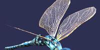 Marsh deathwing