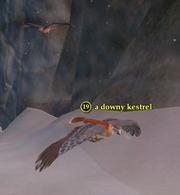 A downy kestrel