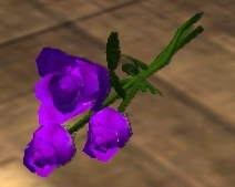 File:Three Purple Roses (Visible).jpg