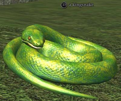 File:A kingsnake.jpg