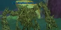 A sharpthorn soothsayer