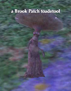 File:A Brook Patch toadstool.jpg