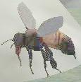 Race bee