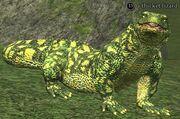 A thicket lizard