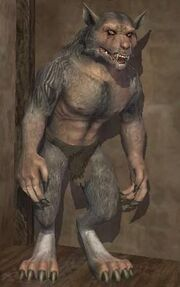Race werewolf