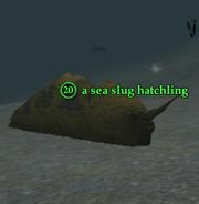 A sea slug hatchling