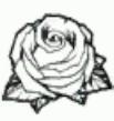 Ai Rosa.png