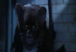 HermioneGato.jpg