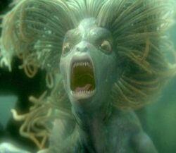 Jefa sirena.jpg