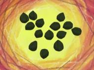 EH15 Semillas fosilizadas