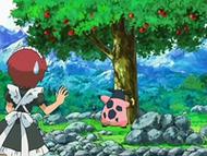 EP531 Miltank golpeando el árbol para que caigan las manzanas