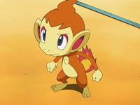 Archivo:EP571 Chimchar de Ash.png
