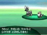 Pokémon salvajes BW