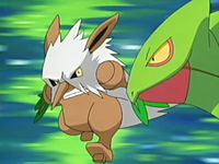 Archivo:EP441 Shiftry y Sceptile.png