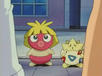 Archivo:EP205 Smoochum y Togepi.png