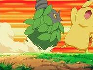 EP499 Burmy de Cheryl VS Pikachu de Ash