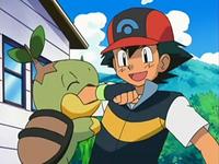 Archivo:EP535 Turtwig mordiendo el brazo a Ash.png