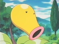 Archivo:EP172 Bellsprout del anciano (3).png