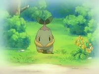 Archivo:EP474 Turtwig solo.png