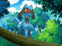 Archivo:EP540 Riolu en el árbol.png