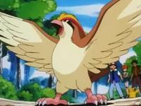 Pidgeot de Ash