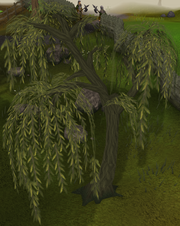 Willow Trees.png