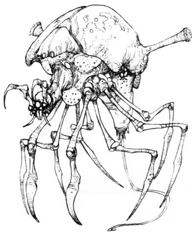 Archivo:Arachnor.jpg