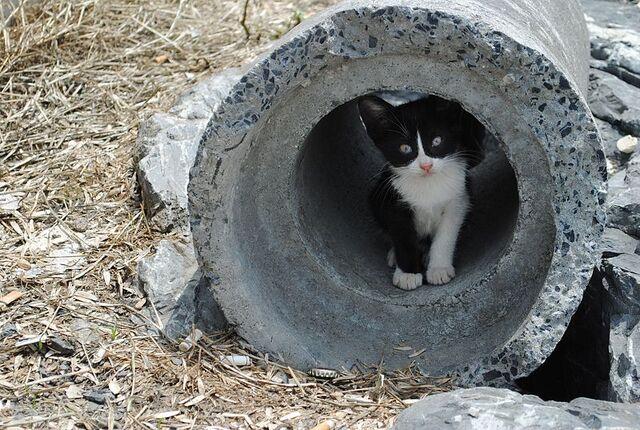 Archivo:Cat in a tube.jpg