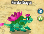 Nenufar dragon lv 4-6