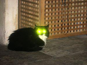 File:Laser cat .jpg