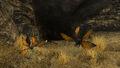 Cazador nest closeup.jpg