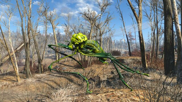 File:FO4 Infected bloodbug.jpg