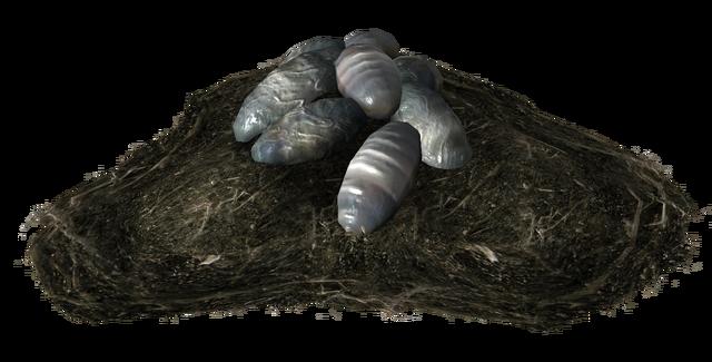 File:Night stalker egg clutch.png