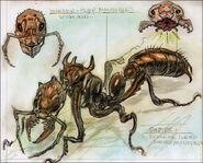 Giant ant CA2