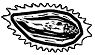 File:Icon irradiated banana yucca.png
