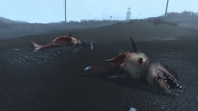 File:FO4 Sea creatures NStar wreck 2.jpg