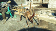 FO4NW Cave cricket