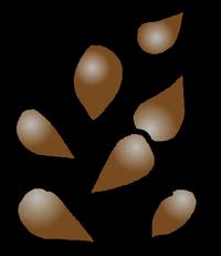 Seeds Bronze