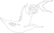 Coraphin Art