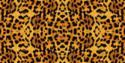SFL Leopard
