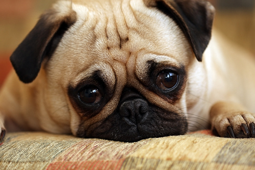 File:Sad Puppy!.jpg