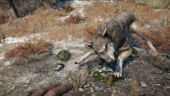 Far Cry® 4 Wolfie Combat