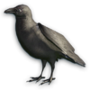 FC3 cutout crow